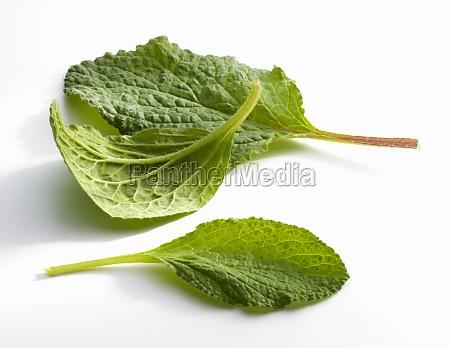 three borage leaves on a white