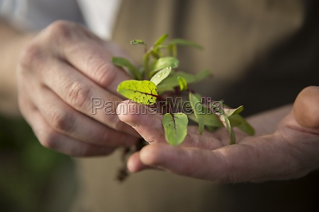 a hand holding a young plant