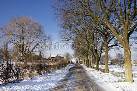 road between trees surrounded by a