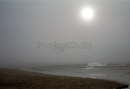 mist on the beach of westerland