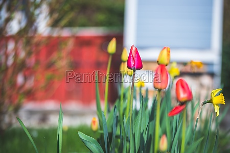 spring time flower scenery colorful spring