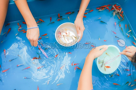 image of goldfish salvation of fair