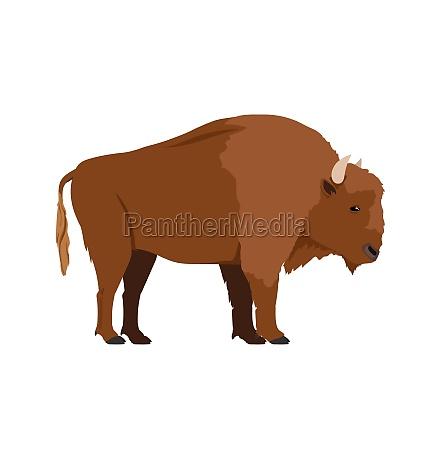 bison bonasus european bison