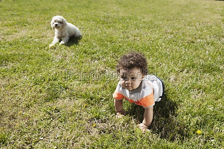 child crawling on grass dog in