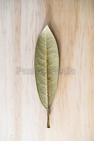 studio shot of green leaf with
