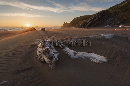 united states oregon driftwood in sand