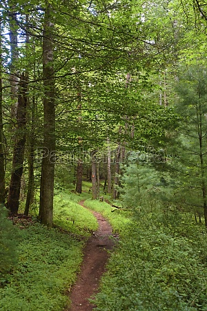 united states virginia path in green