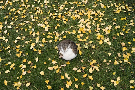 cat sleeping on grass surrounded by