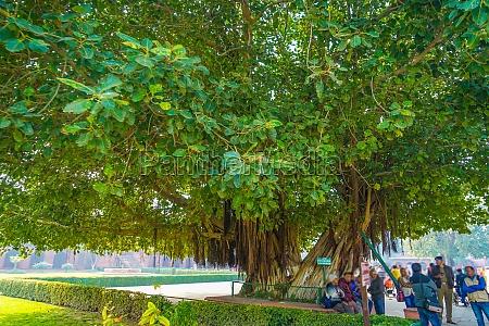 street trees of the taj mahal