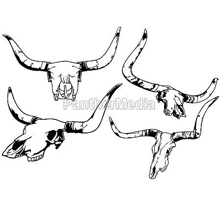set of bull skull illustrations
