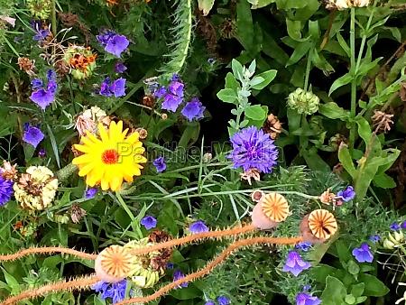flower on a meadow