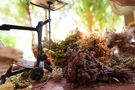 herbalist workshop