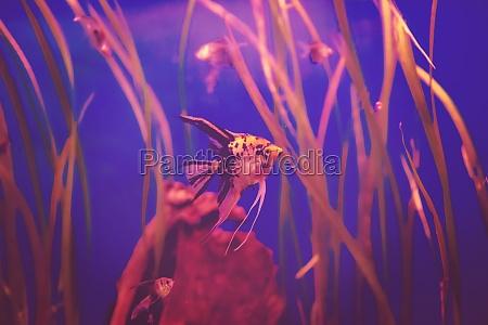 aquarium with colorful fishes