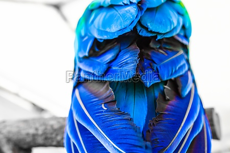 image of tropical colorful parrot harlequin