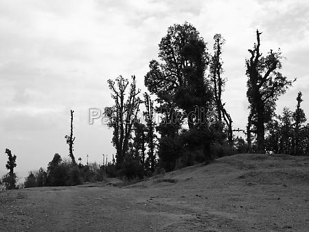 unique shaped trees in helambu nepal