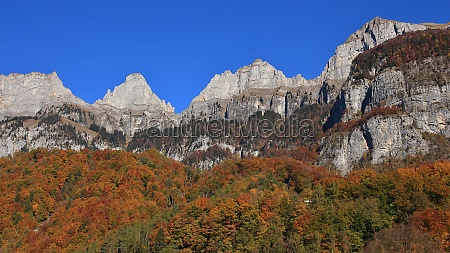 bright colored forest and peaks of