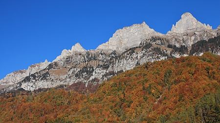 multi colored autumn forest and mountain