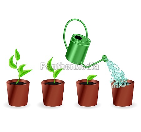 watering pot plant