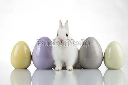 egg little bunny happy easter background