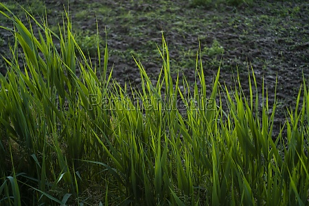 ditch grass detail