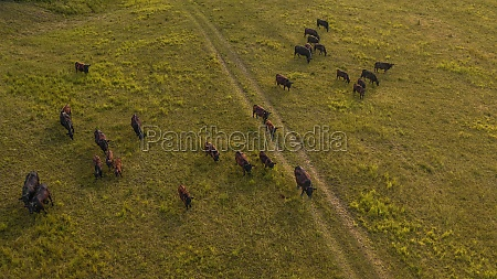 aerial view of a herd of