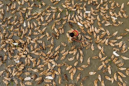 shahjadpur bangladesh 13 july