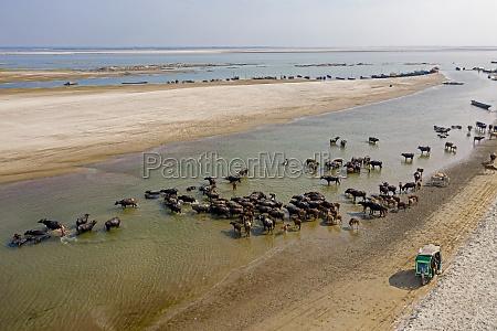 sariakandi bangladesh 02 january