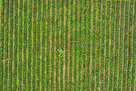 aerial view of a person with