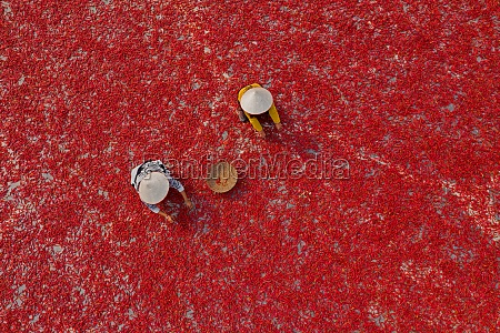 aerial view of two person picking