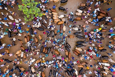 aerial view of people feeding animals