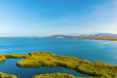 aerial view of green mangroves in