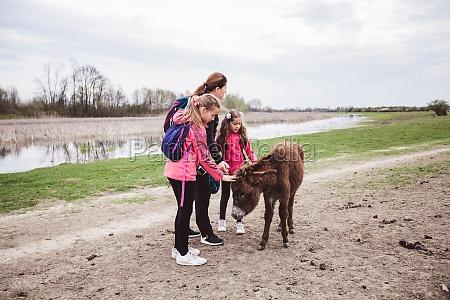 donkeys grazing on pasture at nature