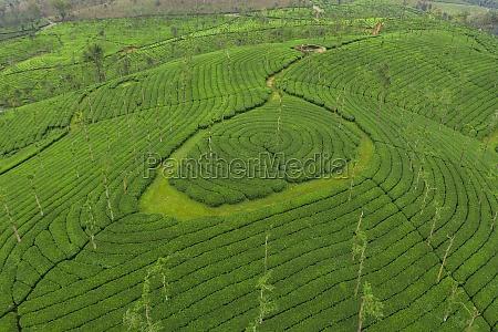 aerial view of tea plantations kerala