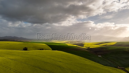 aerial view of canola fields overberg