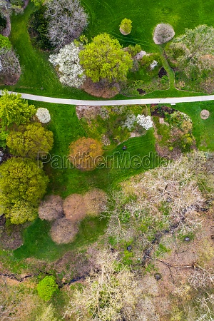 aerial view of trees blossoming in