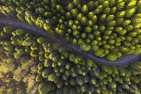 aerial view of the road in