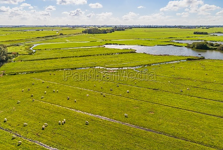 aerial view of sheep in peat
