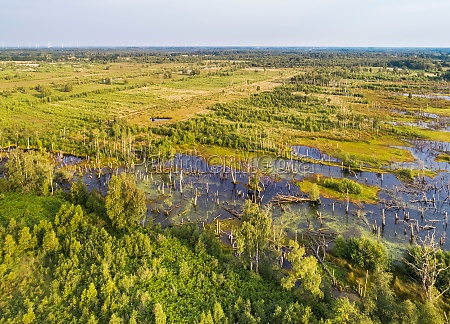 aerial view of drowned trees amtsvenn