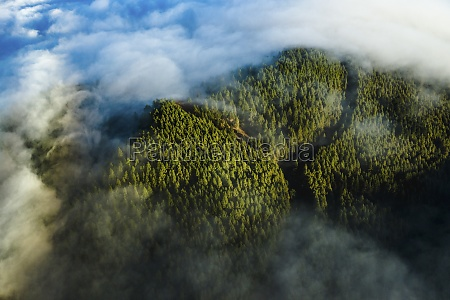 aerial view of forest covered with