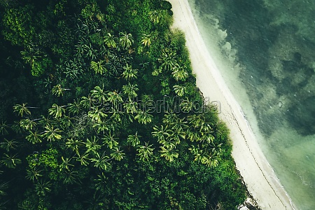 aerial view of palm trees on
