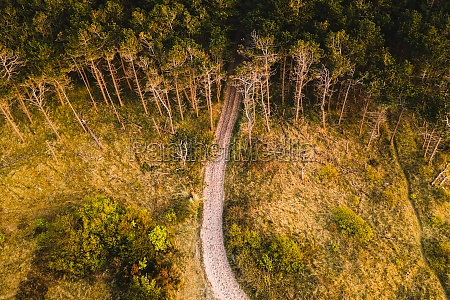 aerial view of a path going