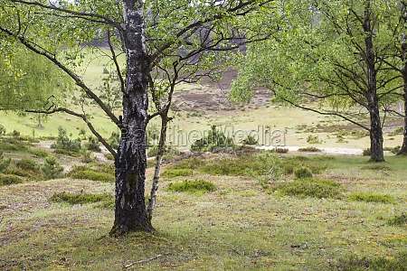 spring forest brachter wald in