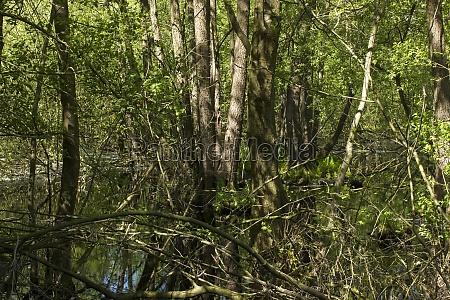 nature reserve fleuthkuhlen in lower rhine