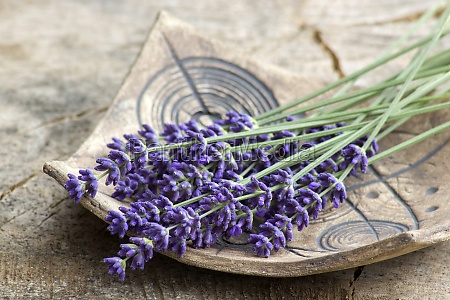 bunch of lavender flowers on clay