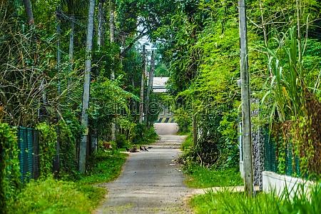 image of sri lanka road