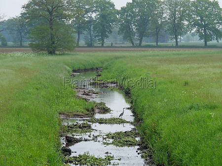 the nature of the german muensterland