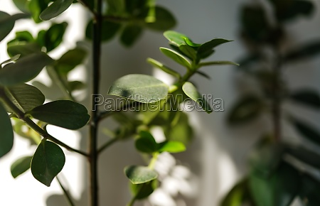 sun shines on room plants from