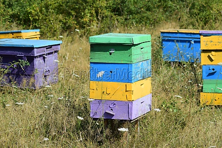 small apiary in the foothills
