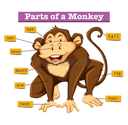 diagram showing parts of monkey
