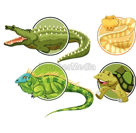 set of reptile on circle sticker